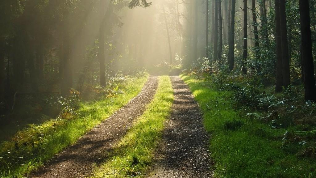 lesne-drogi